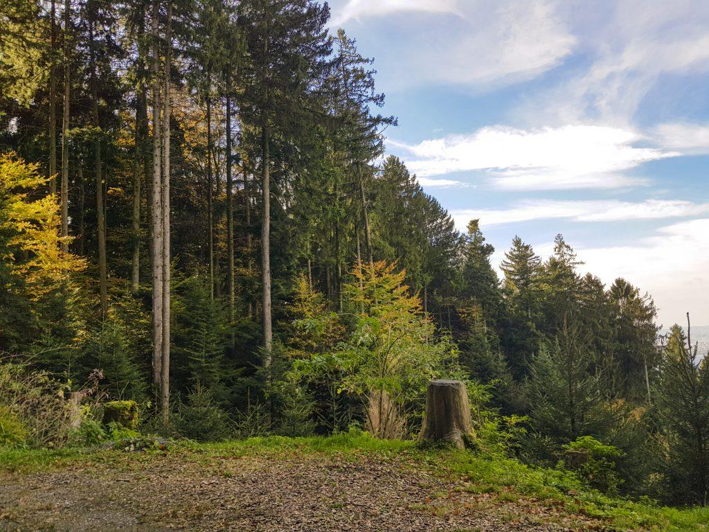 Forstwirtschaft Buechberg Wangen SZ