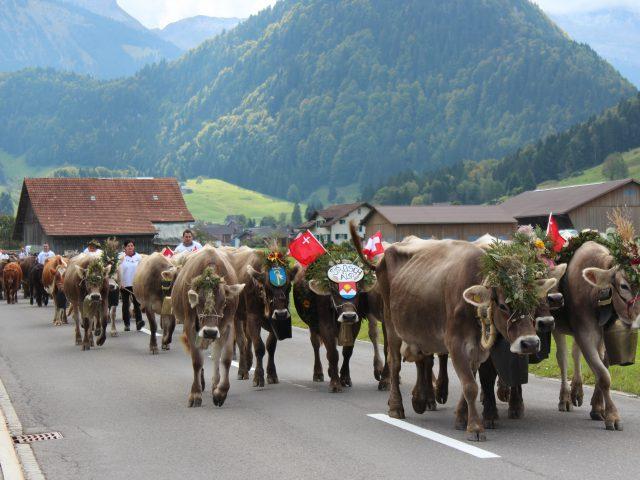 Alpabzug Brüschalp 2017 Vorderthal